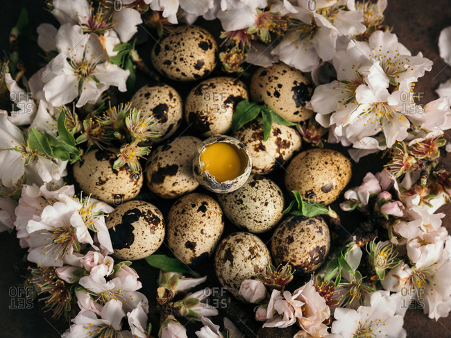 From above quail eggs pile placed in soft white flowers.