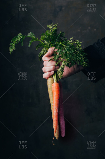 Hand holding a bunch of fresh, colorful carrots