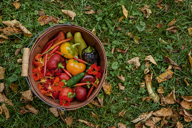 Top view of basket in grass and filed with vibrant fresh picked produce