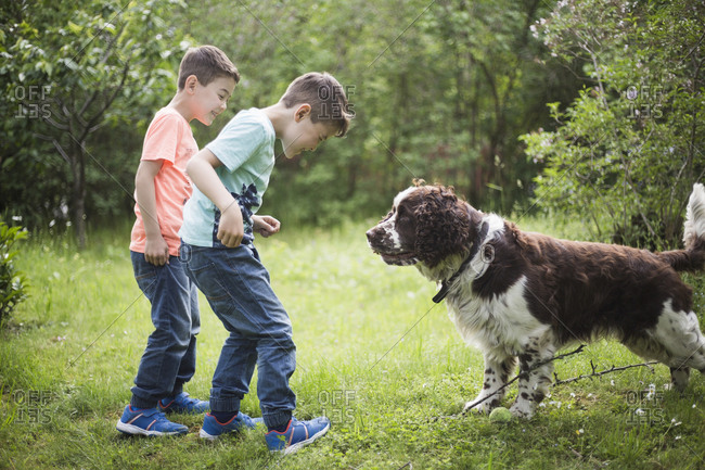 Twin brothers playing with dog on grass in back yard