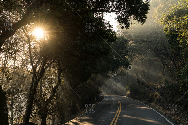 Empty road lit by Sunbeams filtering through trees and smoke caused by wildfires