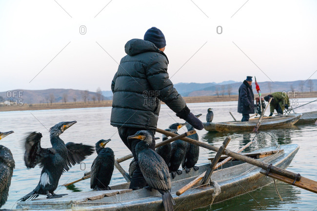 Dandong, China - December 27, 2017: Fishermen and their Cormorants paddle out into the river