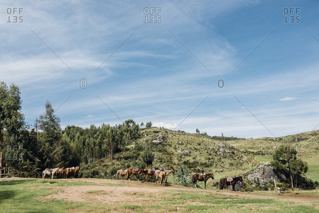 Horses in green hilly landscape