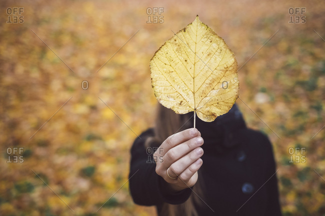 Woman\'s hand holding yellow autumn leaf- close-up