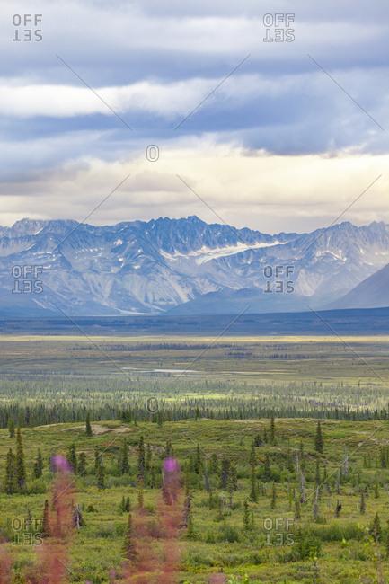 USA- Alaska- landscape at Denali Highway