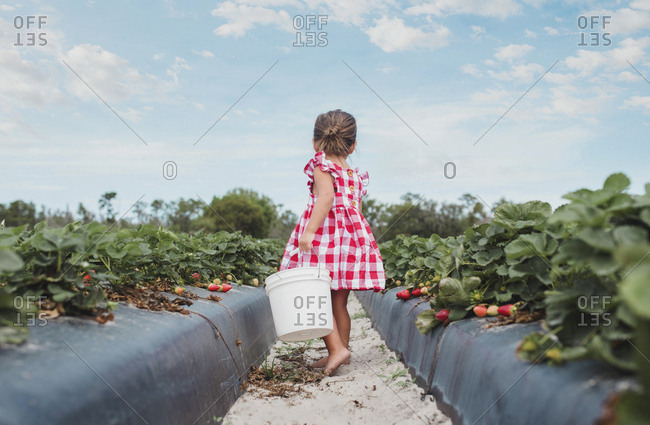 Toddler in strawberry field in Florida