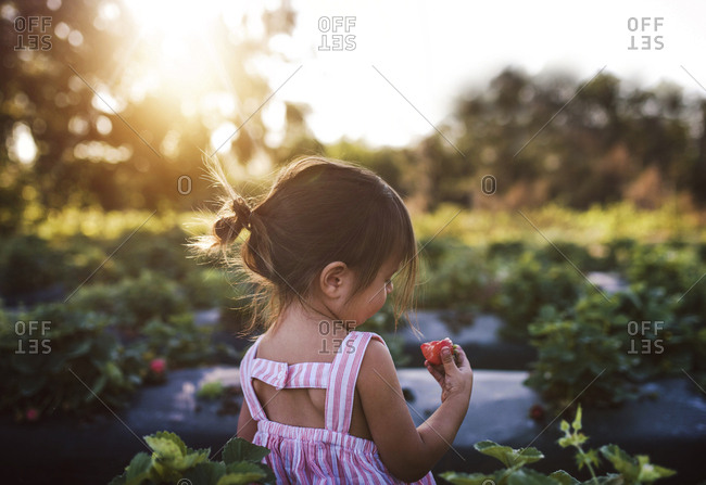 Toddler eating strawberry in field
