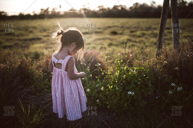 Toddler standing by wildflowers