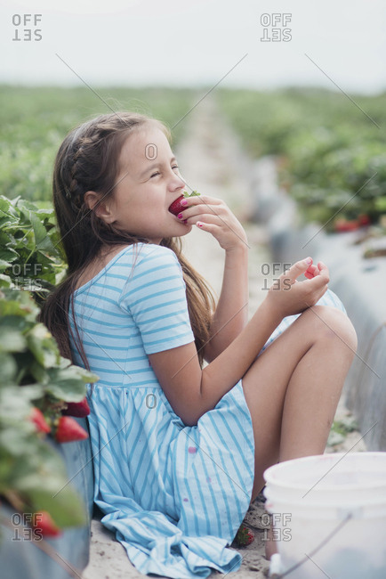 Tween girl eating strawberry