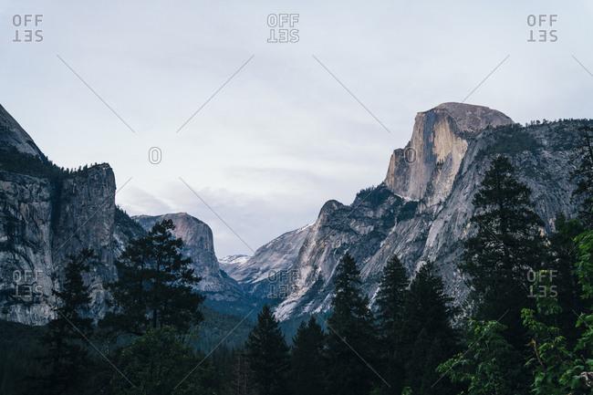 Idyllic view of trees growing in forest by mountains against sky at Yosemite National Park