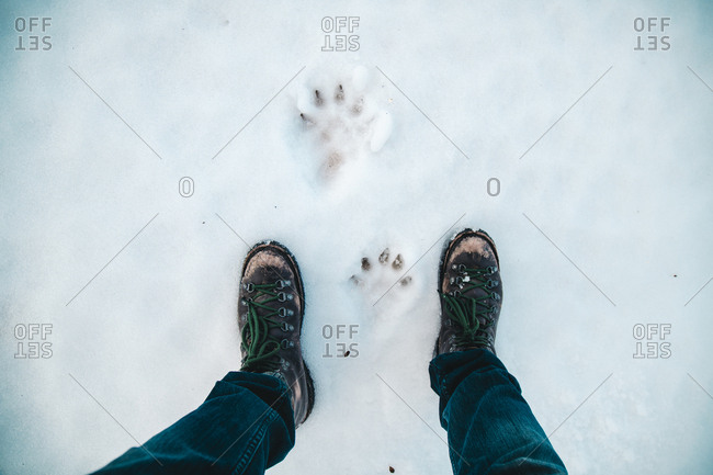 Low section of man standing by paw prints on snow covered field