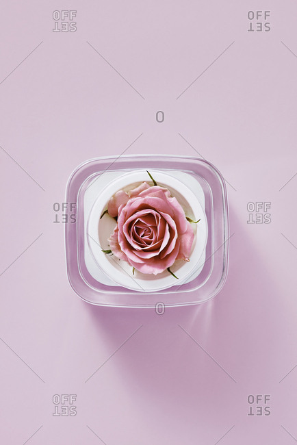 Rose in beauty product container