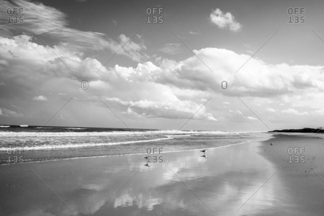Black and white seascape with seagulls landed on sandy beach