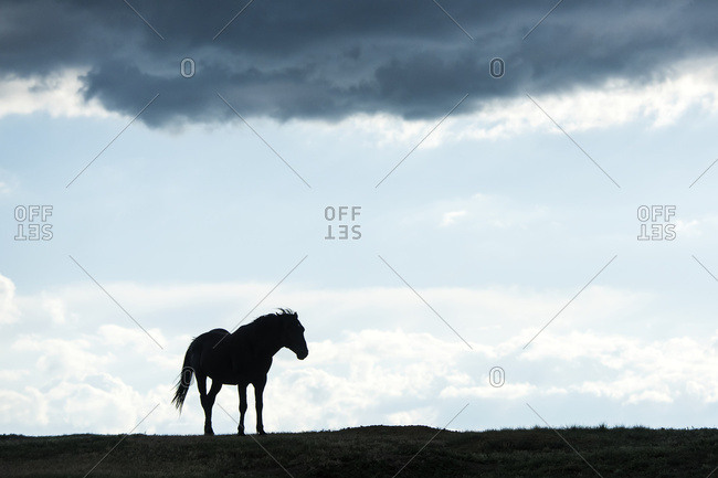 North Dakota, United States of America - July 3, 2016: Silhouette Of  A Wild Horse, Theodore Roosevelt National Park; North Dakota, United States Of America