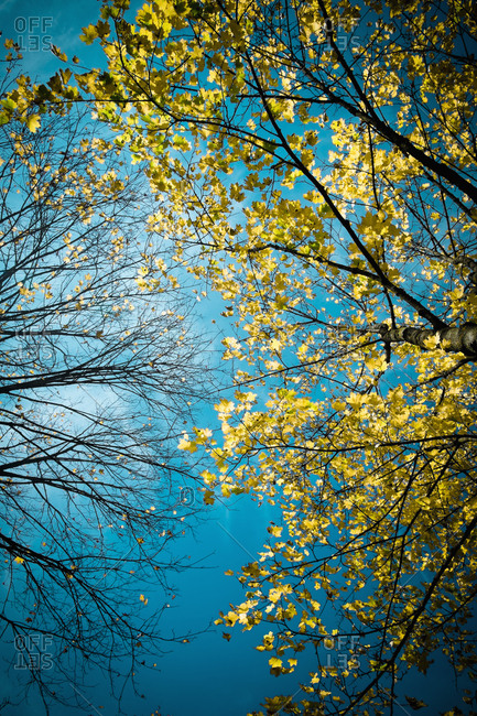Trees with autumn foliage under blue sky