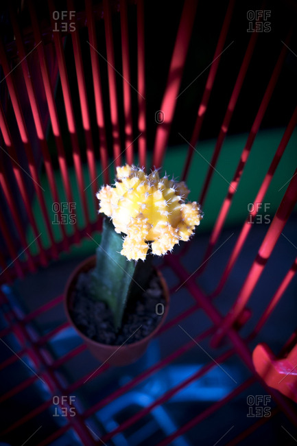 Cactus in shopping cart - Offset