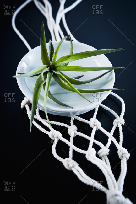 Air plant and macrame plant hanger