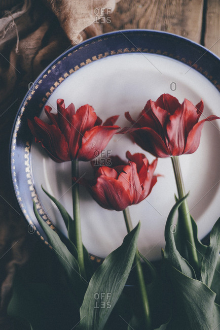 Overhead view of tulips in plate on table