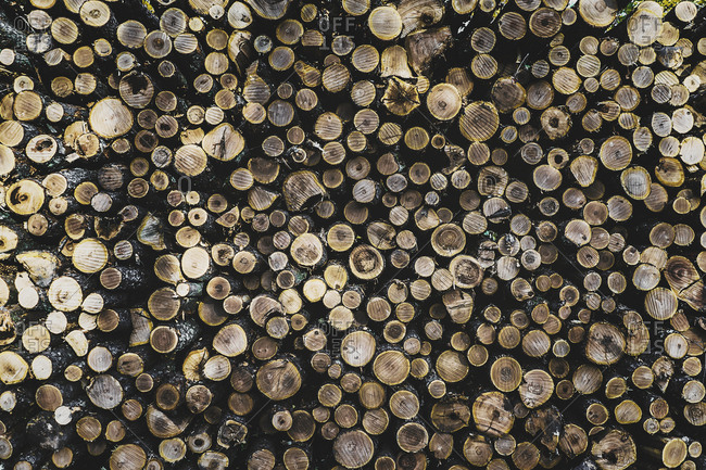 Stack of logs at lumber industry