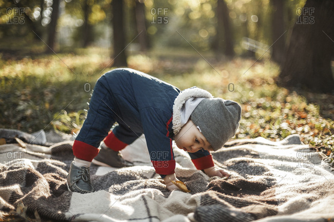 Full length of cute baby boy trying to stand on picnic blanket at park during autumn