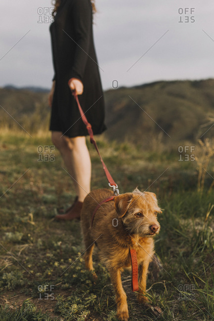 Low section of young woman holding pet leash with dog on field