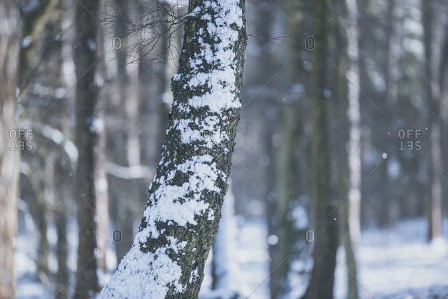 Close-up of tree trunk with patches of snow
