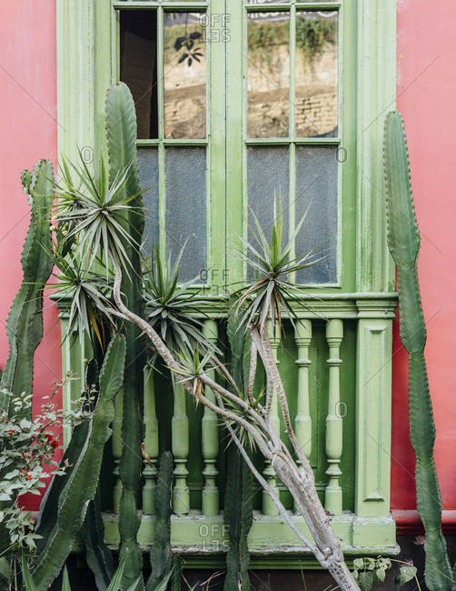 Barranco, Lima, Peru - November 15, 2017: Green cacti in front of green window of pink building