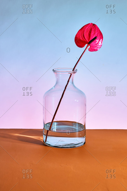 Single Pacora Anthurium in a glass jar