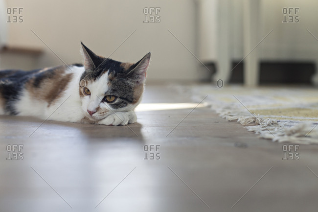 Cat resting on the floor