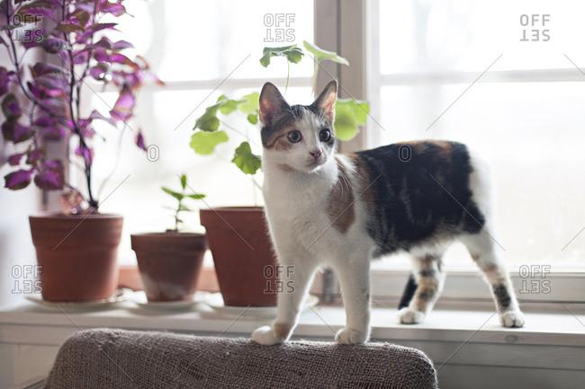 Cat standing on windowsill