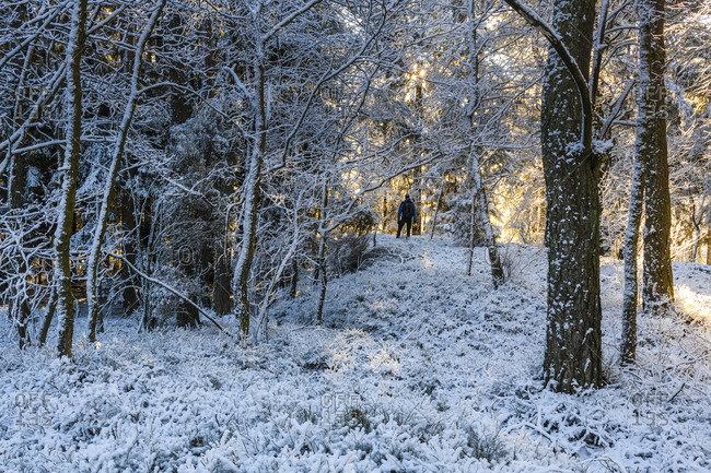 Man standing in winter forest
