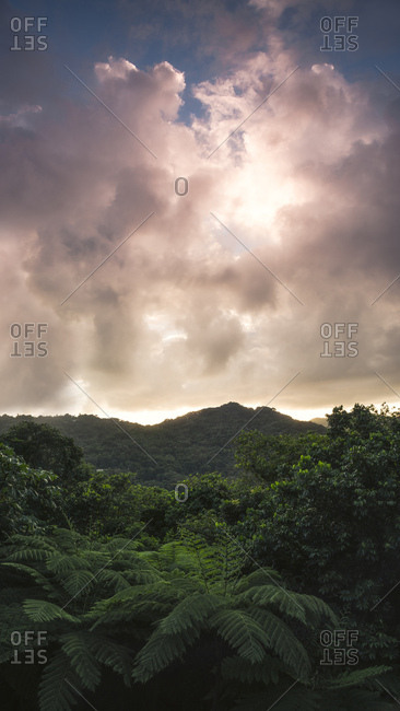 View over the Yunque Rainforest during sunrise on the Caribbean island Puerto Rico