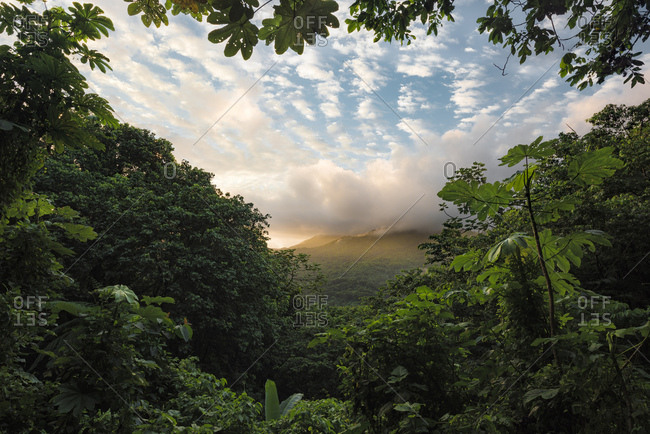 View from the Yunque Rainforest against the green mountains of Puerto Rico in the warm sunrise