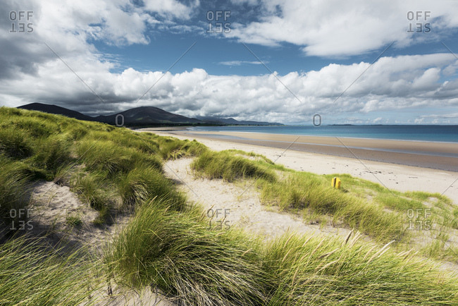 Beach scene with dune grass near Trallee Bay, Kerry, Ireland
