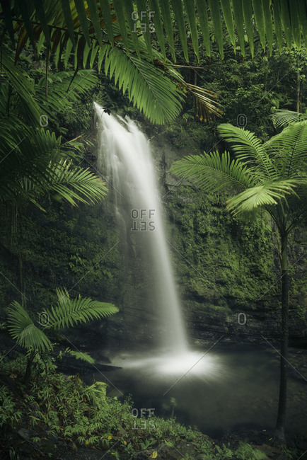 Long exposure of waterfall in Yunque National Park, the green jungle of the Caribbean Island Puerto Rico