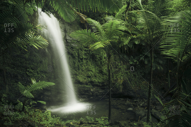 Waterfall in Yunque National Park, the green jungle of the Caribbean Island Puerto Rico