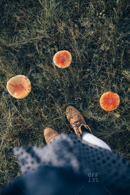 Toadstools and shoes
