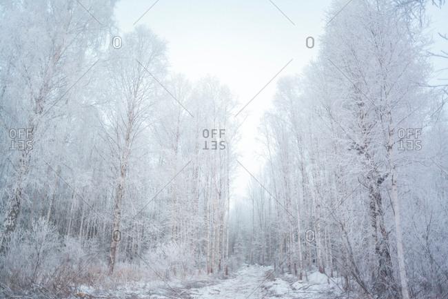 Forest, Ural, Sverdlovsk, Russia
