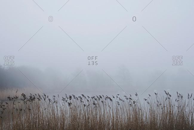 Rural scene of field with mist, Houghton-le-Spring, Sunderland, UK