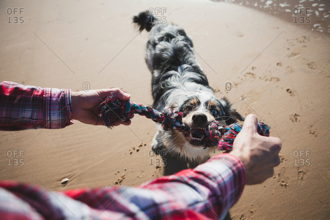 Man and dog playing with rope on beach, personal perspective