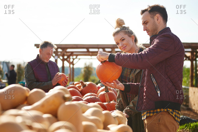 Couple selecting pumpkins in pumpkin patch field