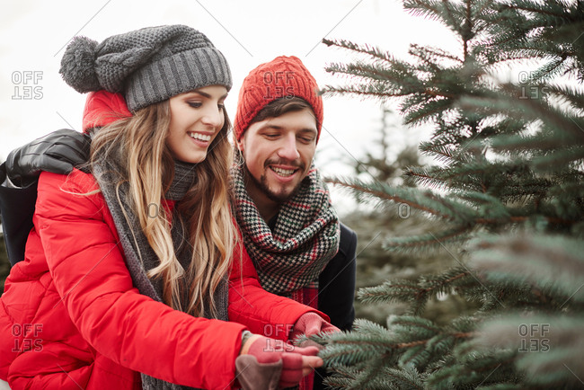 Young couple looking at pine needles while shopping for christmas tree from forest