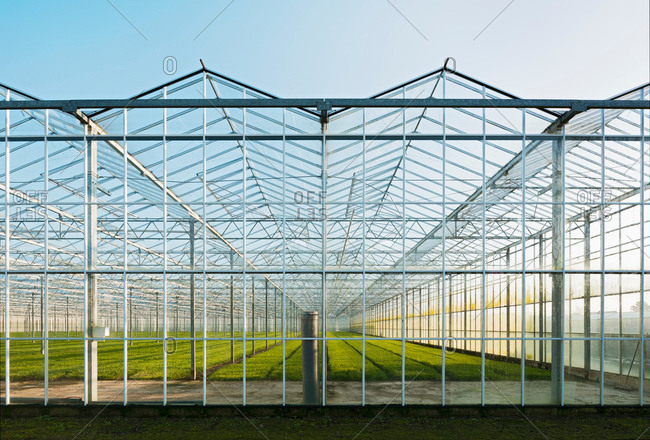 Greenhouse in Westland,  area with the highest concentration of greenhouses in Netherlands