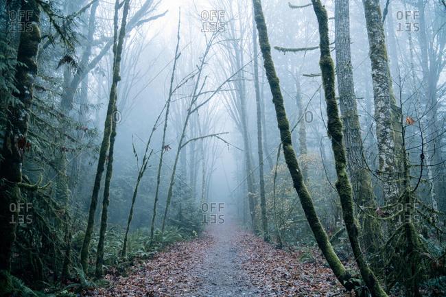 Pathway through forest, Bainbridge, Washington, USA
