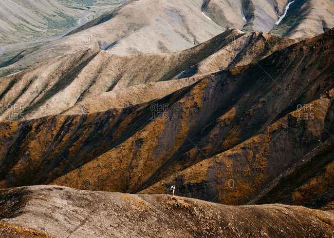 Hiking over ridges in Denali National Park Alaska