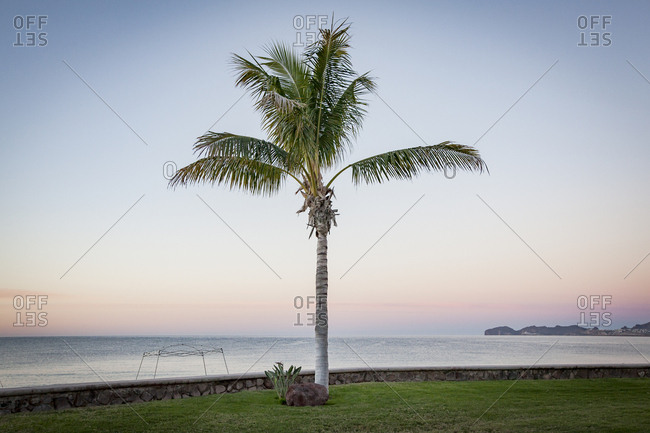 Palm tree growing on grassy field by sea against clear sky during sunset