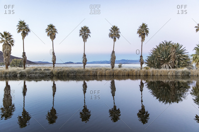Palm trees reflecting on lake against sky at Zzyzx