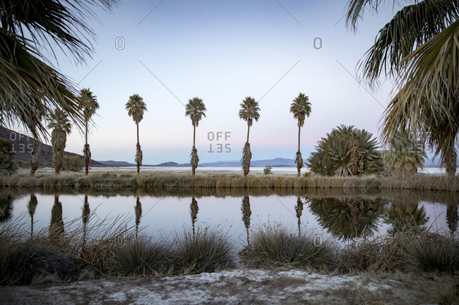 Scenic view of palm trees reflecting on lake against sky at Zzyzx during sunset