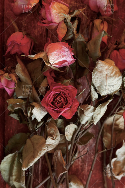 Drying roses