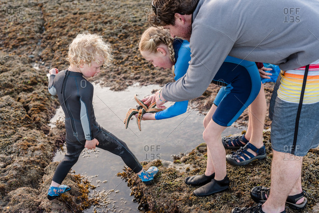 Kids and dad looking at sea star found on the coast of New Zealand